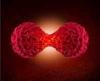 División de la célula cancerosa Imagenes de archivo