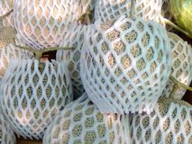Division cantaloupes. Sweet fruit wrapped with foam Stock Photos