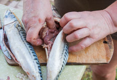 Division of fish. Preparation of meal Stock Photo
