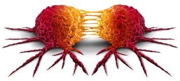 Divisione della cellula tumorale Immagine Stock