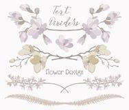 Divisores florais do texto do vetor Elementos do projeto da flor Fotos de Stock