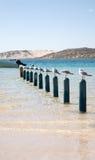 Dix mouettes se reposant sur des pôles Image stock