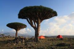 Dixam plateau. A beautiful camping spot at Dixam Plateau / Socotra Island Stock Images