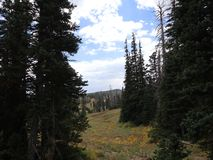 Dixie Forest bonita! foto de stock royalty free