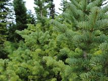 Dixie Forest bonita! fotografia de stock