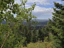 Dixie Forest View Point! imagens de stock