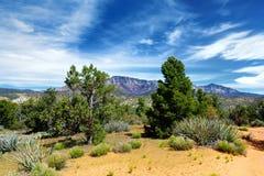 Dixie National Forest cerca de formaciones planas de la piedra arenisca de Yant en Utah imágenes de archivo libres de regalías