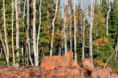 Dixie National Forest Lava Field Royalty Free Stock Photo