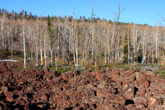 Dixie National Forest Lava Field Images stock