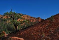 Dixie, réserve forestière, Arizona, Etats-Unis images stock