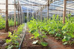 DIY automatiques arrosent le circuit de refroidissement pour s'élever végétaux dans la pépinière de ferme et de jardin photo libre de droits