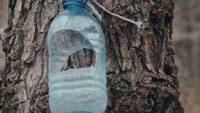 DIY dozownik dla ptaków handmade od pustej zwierzę domowe butelki wiążącej drzewny bagażnik trzepocze w wiatrze w wczesnej wiośni zbiory wideo