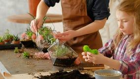 Diy florarium创造性的家业多汁植物 影视素材