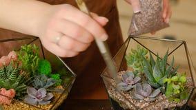 Diy florarium自然家庭办公室内部装饰 股票录像