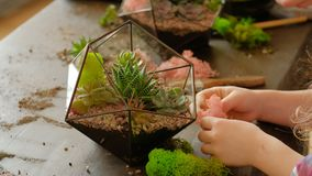 Diy florarium hobby natural handmade gift idea. DIY florarium. Hobby and leisure. Natural handmade gift idea. Girl using moss to decorate succulent arrangement stock footage