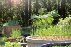 DIY grow your own backyard community organic garden. Grow your own backyard community organic garden royalty free stock images