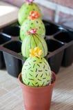 DIY i handmade Malujący jajko wielkanoc szczęśliwy Naturalny barwidło Wiosen rozsady charcica Kaktusowy okwitnięcie easter jajka  obraz stock