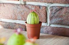 DIY i handmade Malujący jajko Wiosen rozsady charcica Kaktusowy kwitnienie wielkanoc szczęśliwy Naturalny barwidło Jajeczny polow obraz royalty free