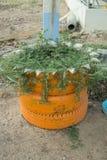 DIY-Idee, vom Reifen aufzubereiten benutzt mit Blumen oder Anlage im alten Gummi Lizenzfreies Stockfoto