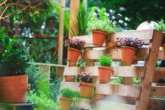 Free DIY Recycled Wooden Pallet For Flower Pots. Storage Industrial Pallet Used In Gardening For A Wall Decoration As A Shelf For Royalty Free Stock Photography - 155237887