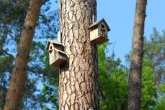DIY, uccello di legno fatto a mano creativo alloggia l'attaccatura sul pino Fotografia Stock Libera da Diritti