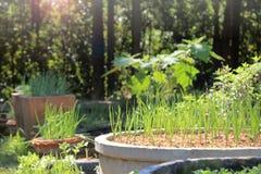 DIY växer din egen organiska trädgård för trädgårdgemenskap royaltyfria bilder