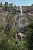 Diyaluma vattenfall i Sri Lanka Fotografering för Bildbyråer
