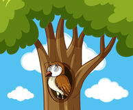 Dizzy owl in hollow tree Royalty Free Stock Photography