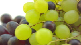 Dizzy spinning Grapes, close up stock footage