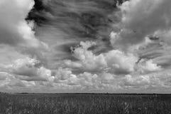 Djärva himlar över floden av gräs Arkivfoton