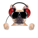 Dj disco dog Stock Images