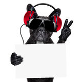 Dj dog Royalty Free Stock Photo