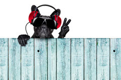 Dj dog. Listening to music behind an empty and blank wood wall with victory and peace fingers Royalty Free Stock Images