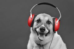 DJ Doggy Fun. DJ doggy with red earphones with room for your type in black and white Royalty Free Stock Photos