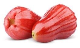 Djamboevruchten of chomphu op wit worden geïsoleerd dat Stock Afbeelding