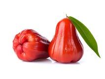 Djamboevruchten of chomphu op witte achtergrond worden geïsoleerd die Royalty-vrije Stock Afbeelding