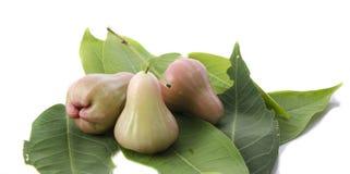 Djamboevruchten die op witte achtergrond worden geïsoleerde Stock Afbeelding