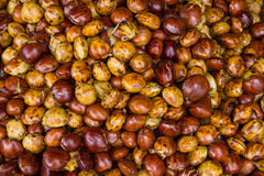 Djenkol-Bohnenfrucht Stockbild