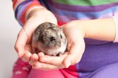 Djungarian仓鼠在女孩手上 免版税库存图片
