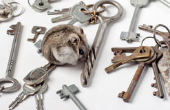 Djungarian Hamster on keys Stock Image