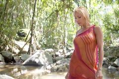 djungel royaltyfri foto