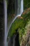 djungel Arkivbilder