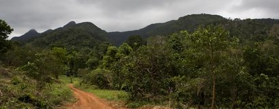 djungel Arkivfoto
