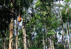 djungel fotografering för bildbyråer