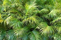 djungel Royaltyfria Foton