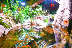 Djungel - akvarium Dubai Royaltyfria Bilder