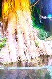 Djungel - akvarium Dubai Fotografering för Bildbyråer