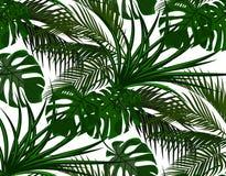 Djungel Gräsplansidor av tropiska palmträd Monster agave seamless bakgrund isolerad white illustration Arkivfoto