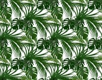 Djungel Gräsplansidor av tropiska palmträd, monstera, agave seamless bakgrund isolerad white illustration Royaltyfri Foto
