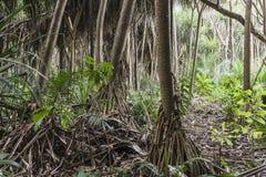 Djungel i Zanzibar Fotografering för Bildbyråer